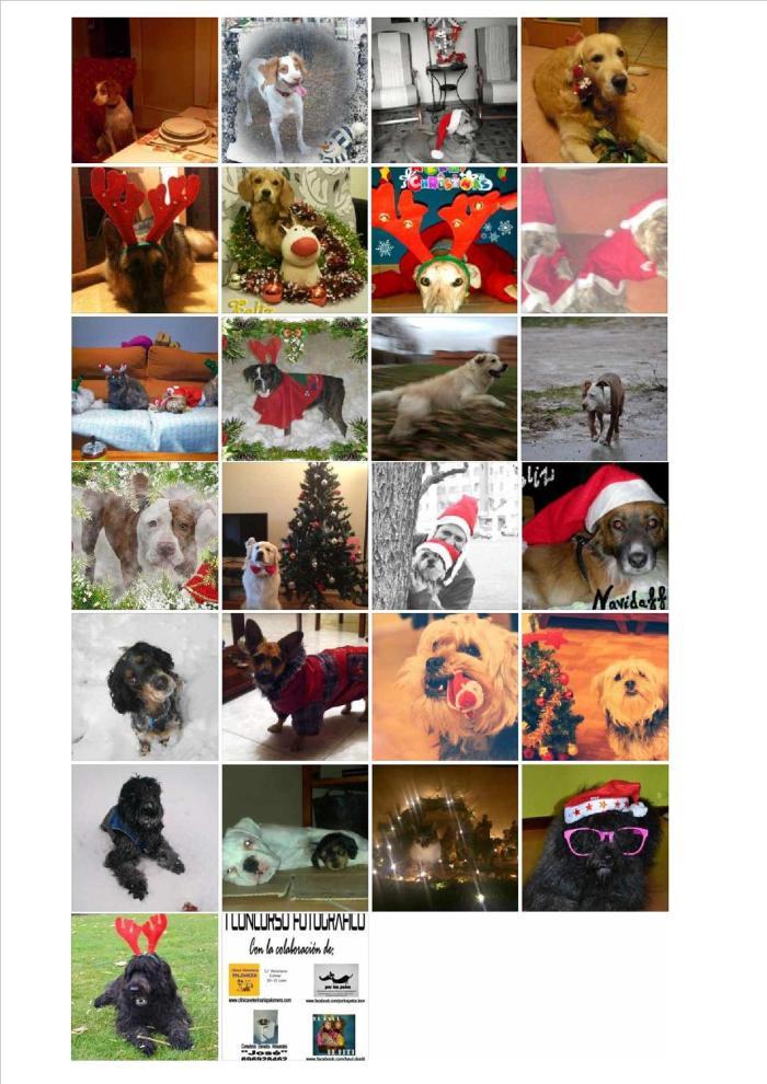 Estos son los participantes en nuestro I Concurso Fotográfico